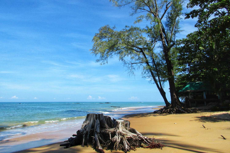 Afgezaagde boomstronk op het strand van Nang Thong Beach