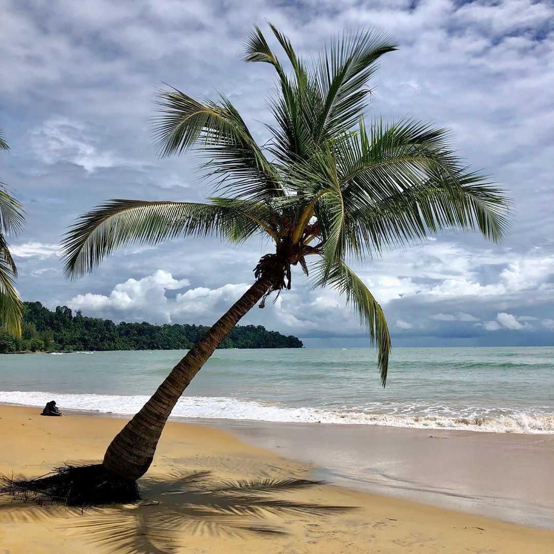 Palmboom op het strand met een kalme zee