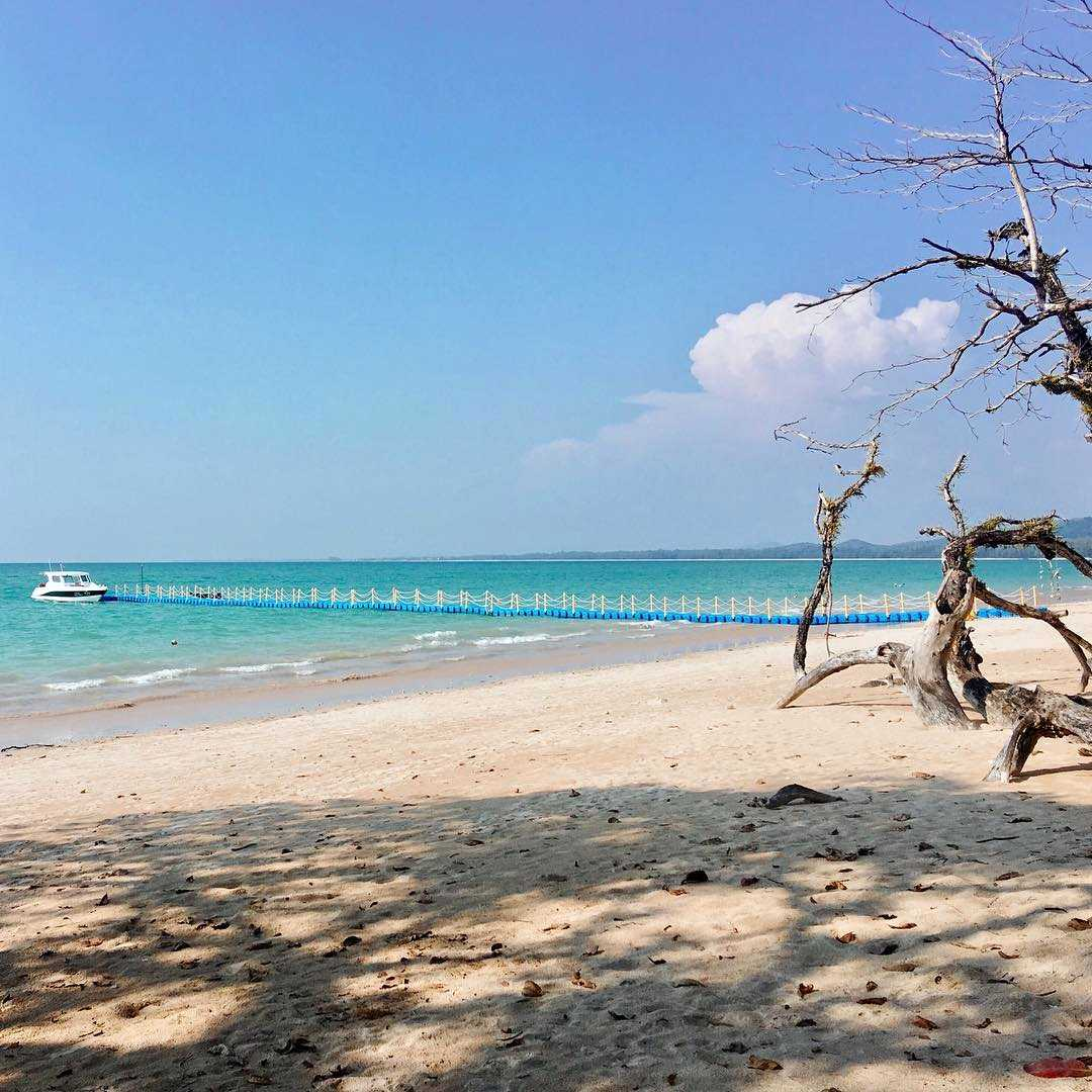 white beach and blue sea and tree trunks