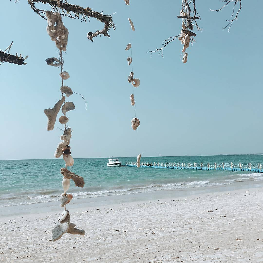 Shells garlands on a branch with in the background the beach and the sea