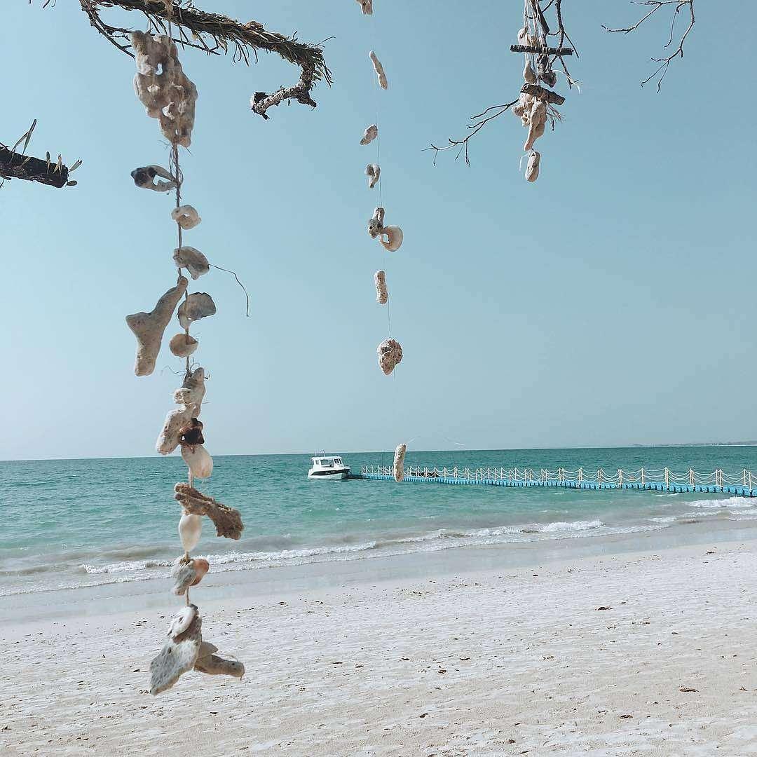 Schelpen slingers aan een tak met op de achtergrond het strand en de zee zee