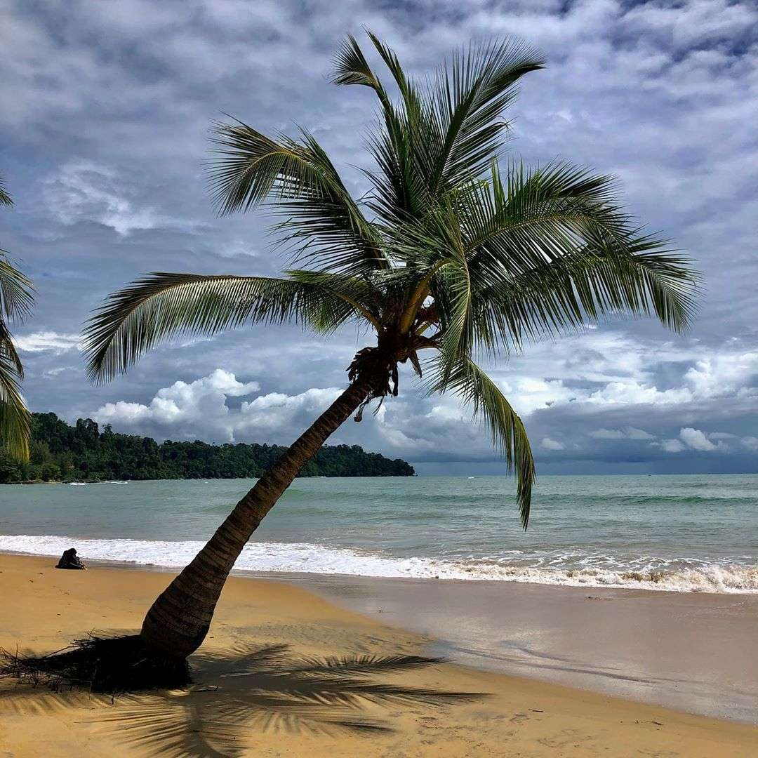 Palm tree at Nang Thong Beach in Khao Lak