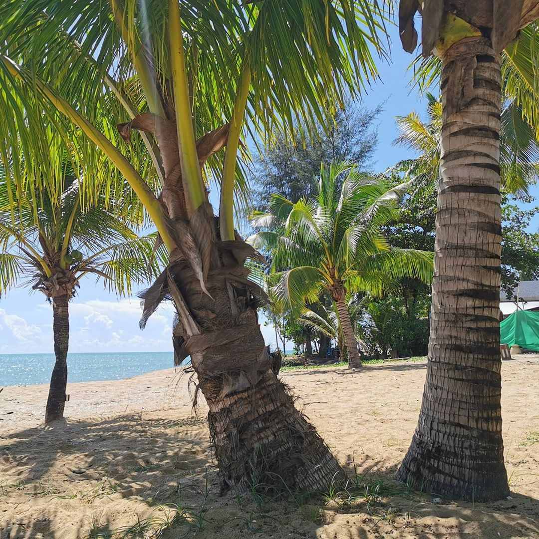 Palm trees on Khuk Khak Beach in Khao Lak