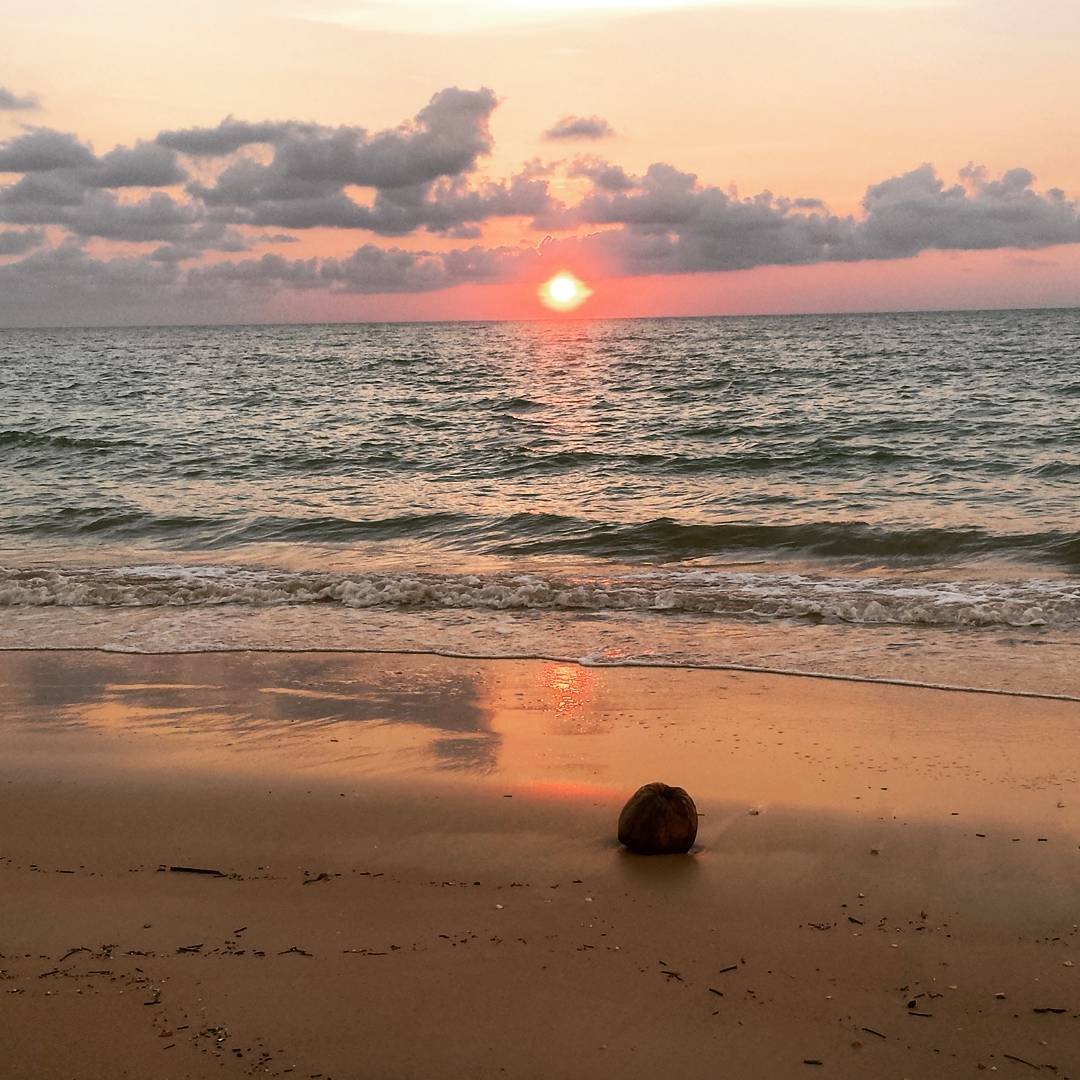 Coconut washed ashore on Pak Weep Beach