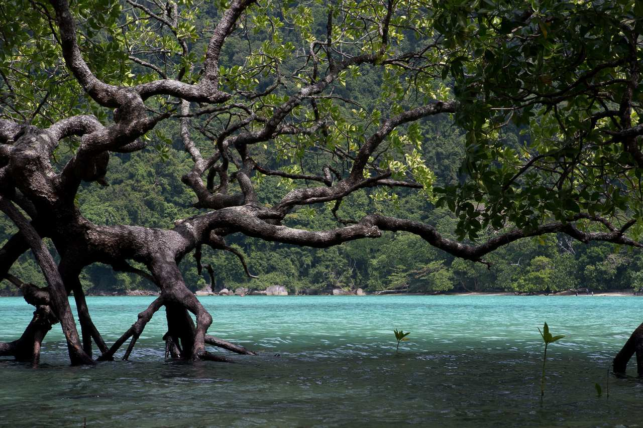 Surin Eilanden in Thailand