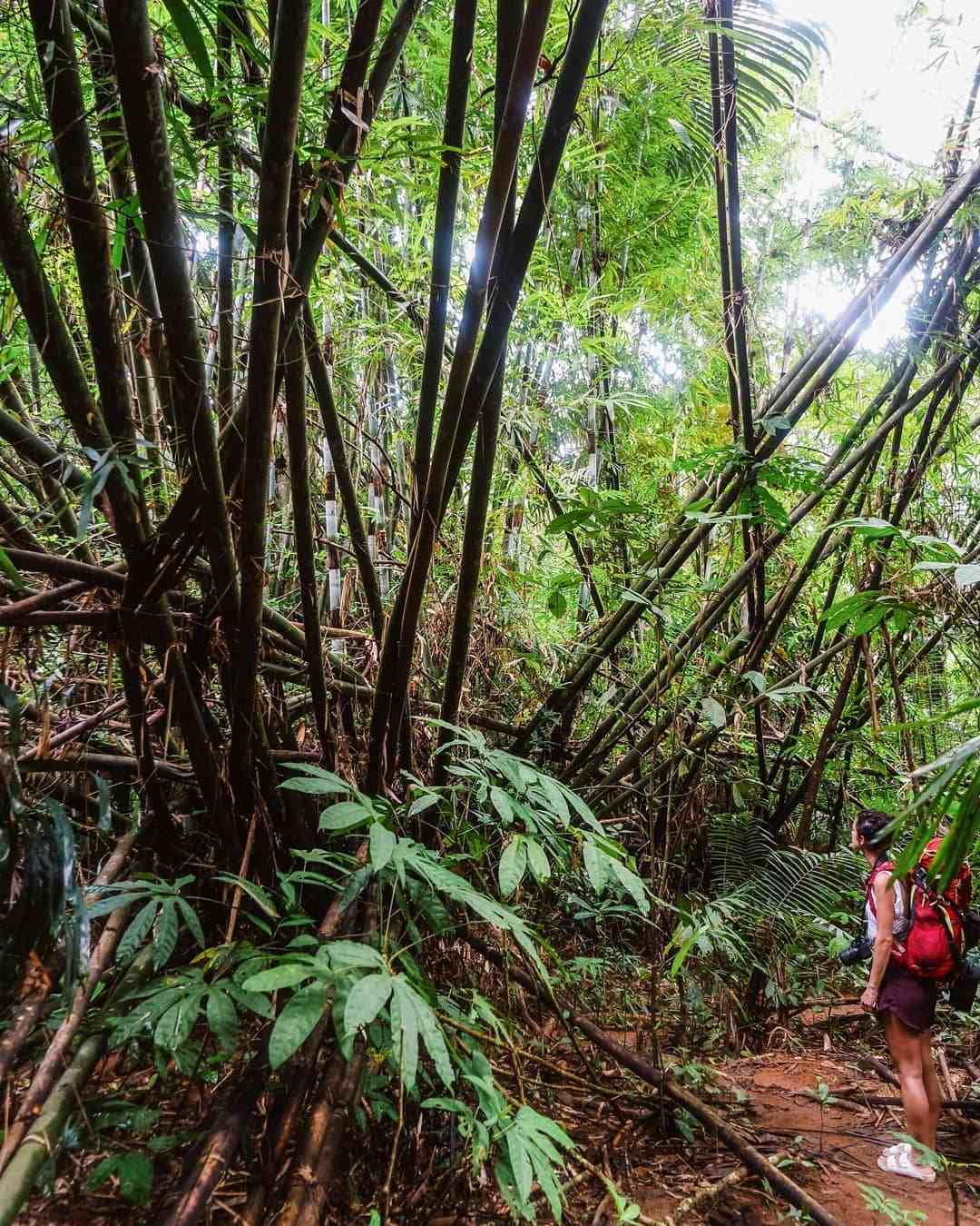 Jungle in the Sirinat National Park op Phuket