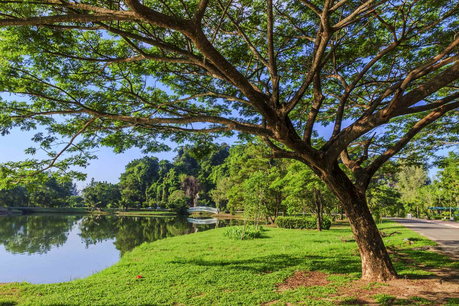 Waterfront tree in park of Phang Nga Town