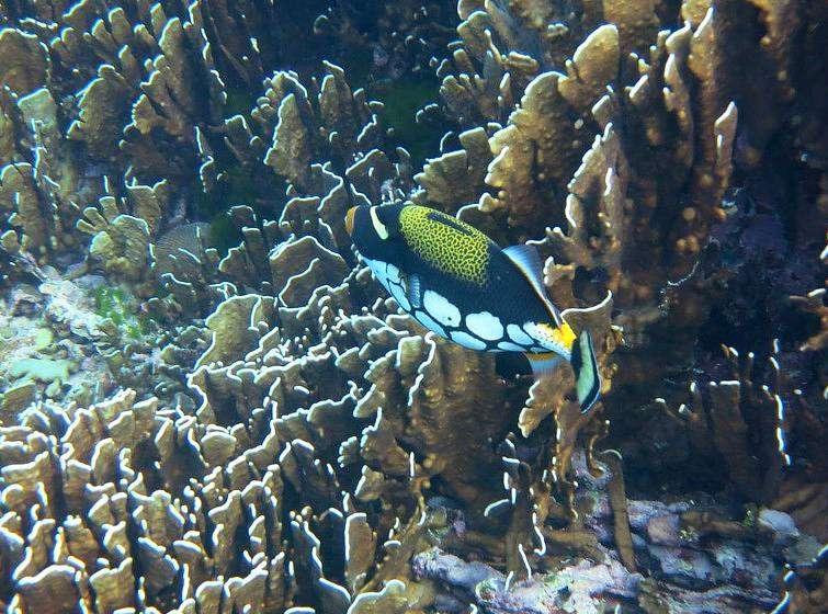 Colorful fish, snorkeling at the Similan Islands