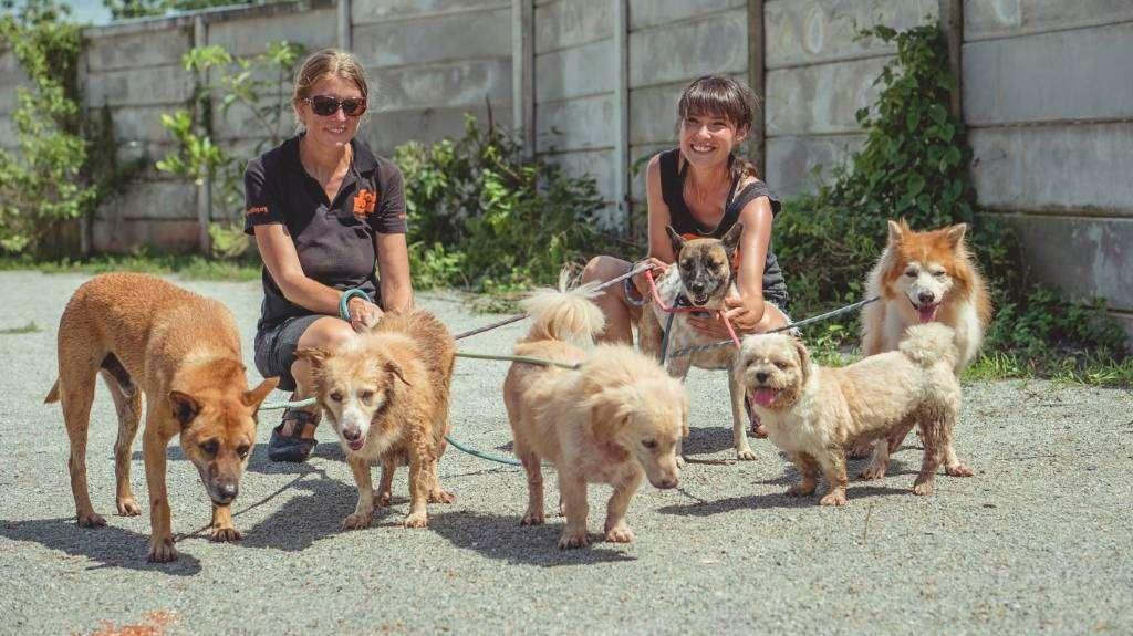 Blij honden dankzij Soi Dog Foundation in Phuket