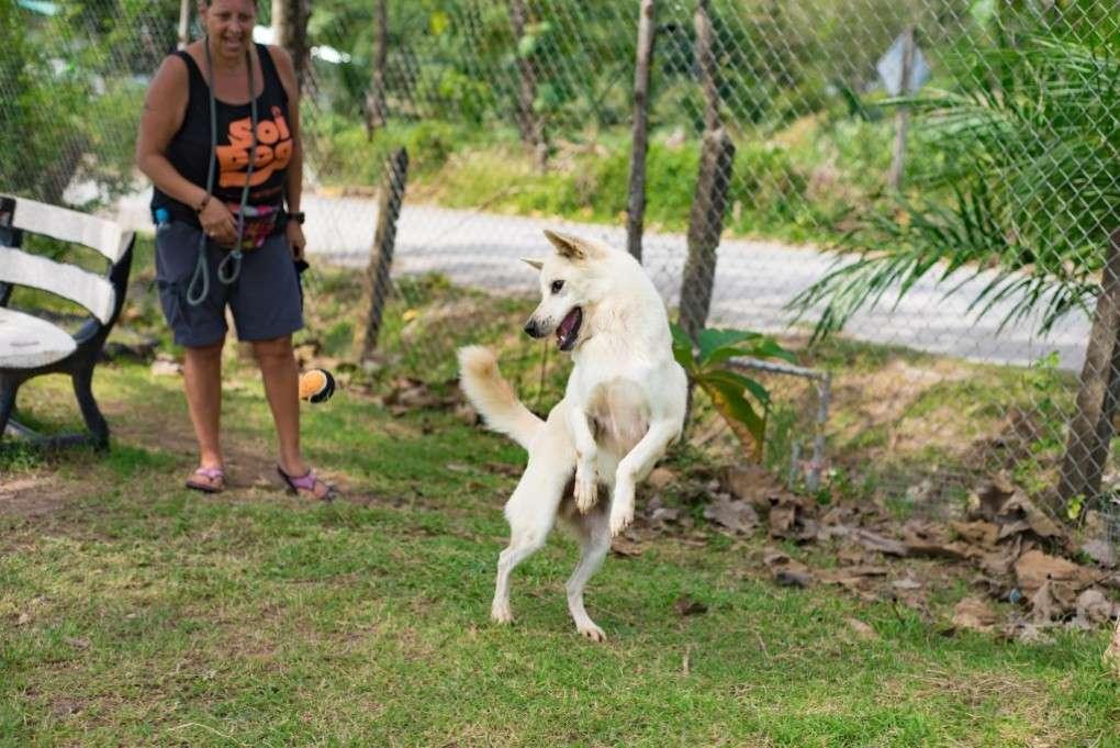 Blij hond dankzij Soi Dog Foundation in Phuket