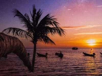 Zonsondergang Met Palmboom Op Mae Haad Op Koh Tao