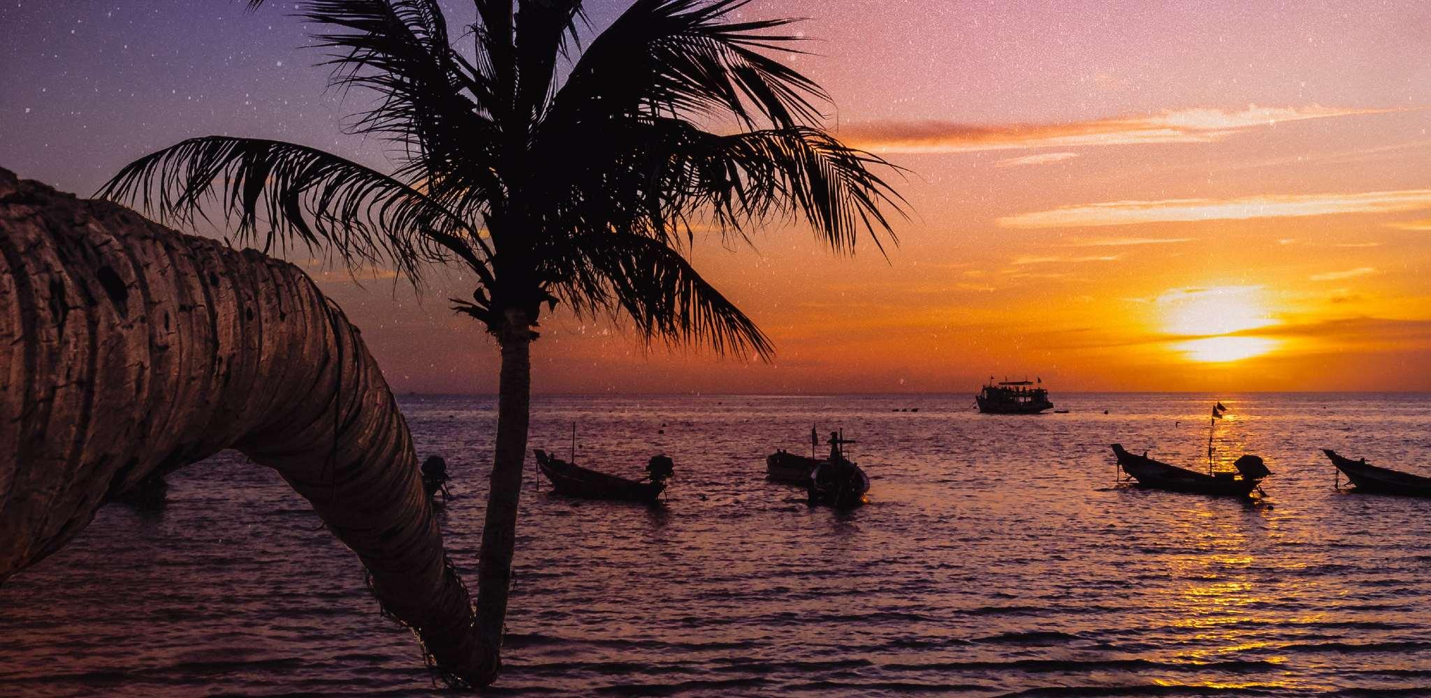 Sunset with palm tree on Mae Haad on Koh Tao