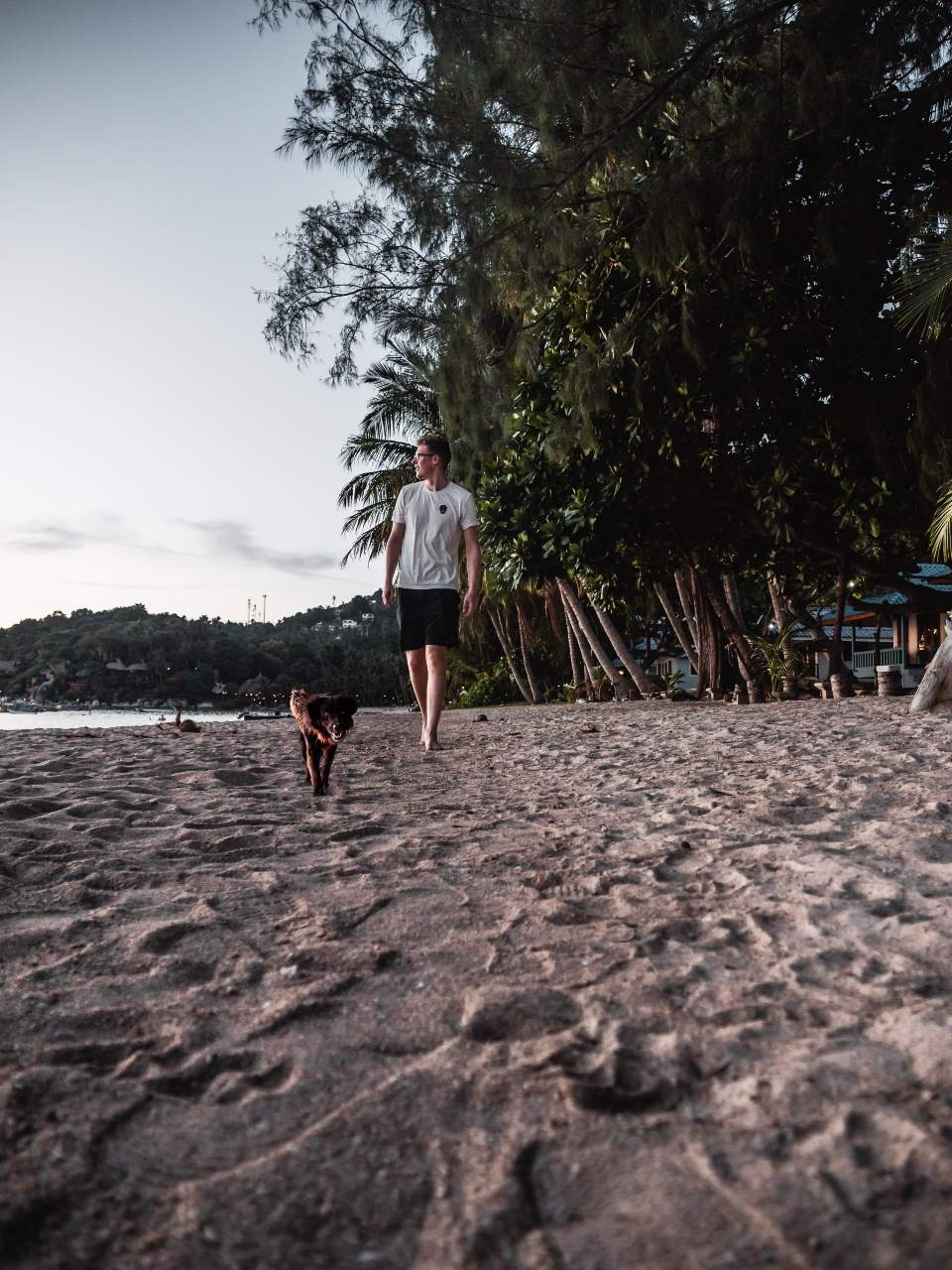 Beach on Koh Tao in Thailand with a nice dog
