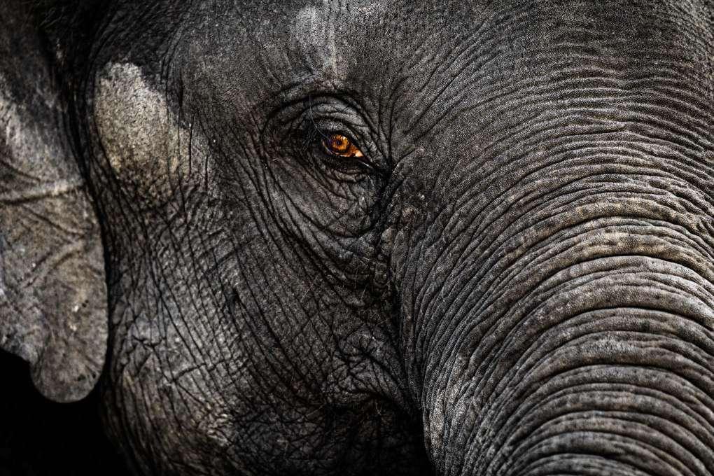 Thai elephant head