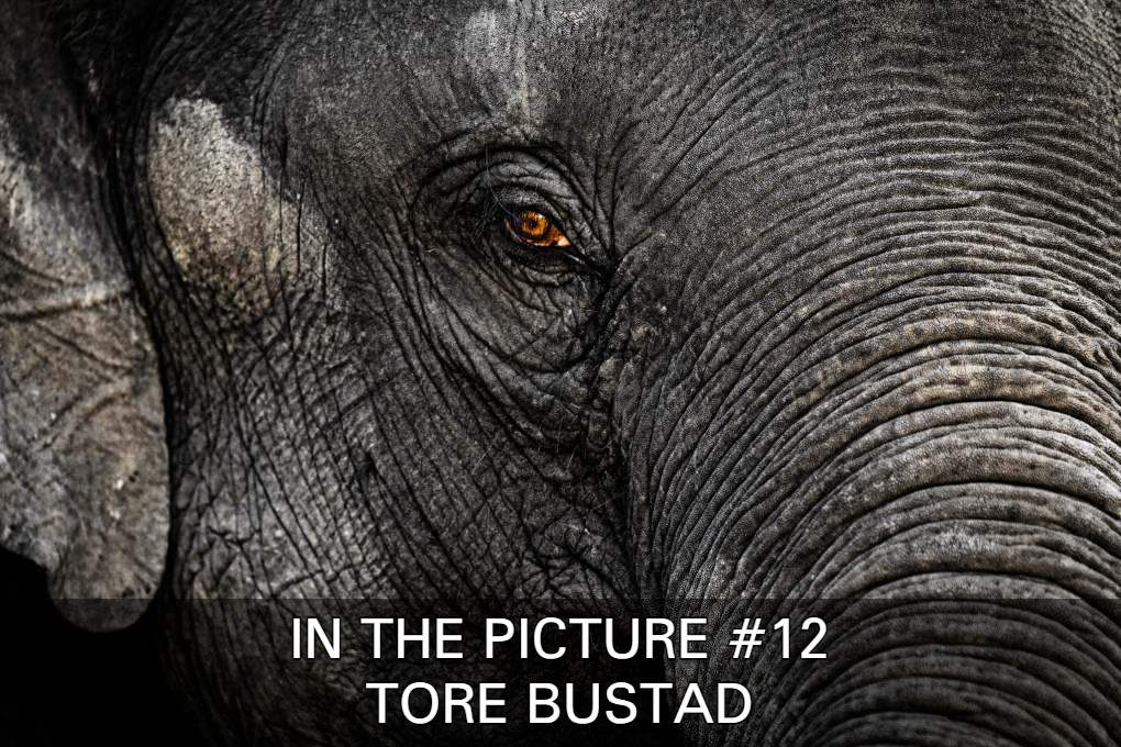 Click To See The Images In In The Picture #12 With Tore Bustad