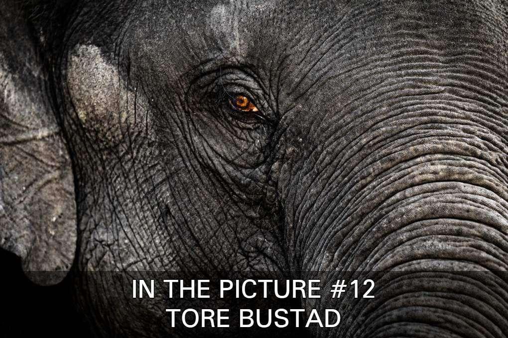 Bekijk De Foto's Van Tore Bustad In In The Picture #12