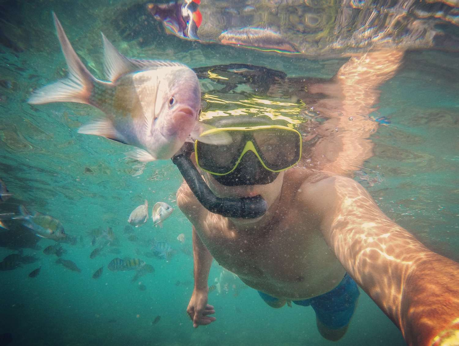 Snorkeling on Koh Phi Phi in Thailand