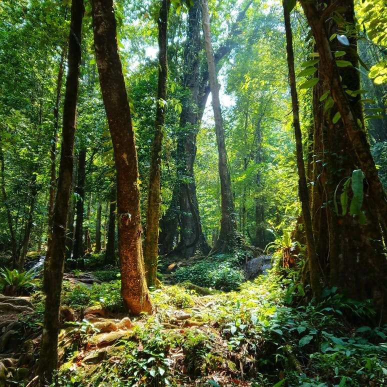 Het Sa Nang Manora Forest Park in de buurt van Phang Nga Town
