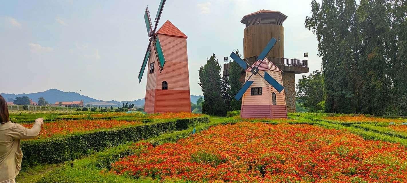Mills in flower field