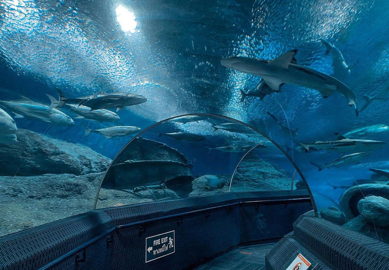 underwater tunnel with sharks at aquarium underwater world Pattaya