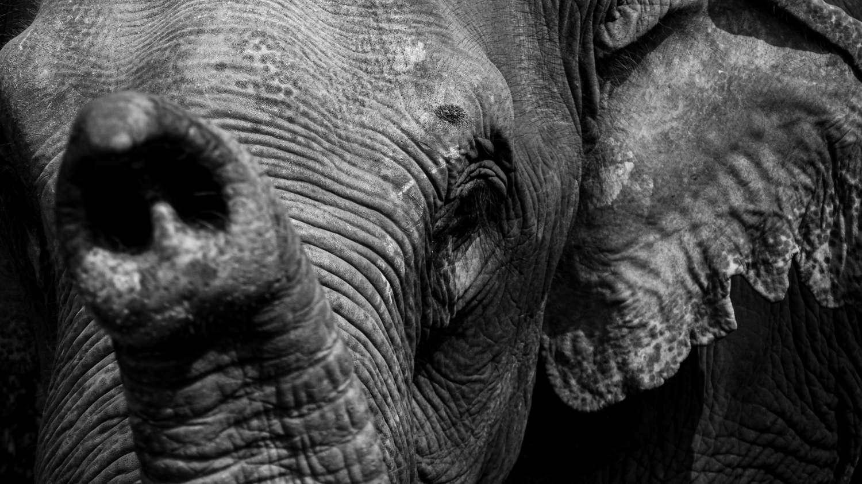 An elephant in Khao Lak