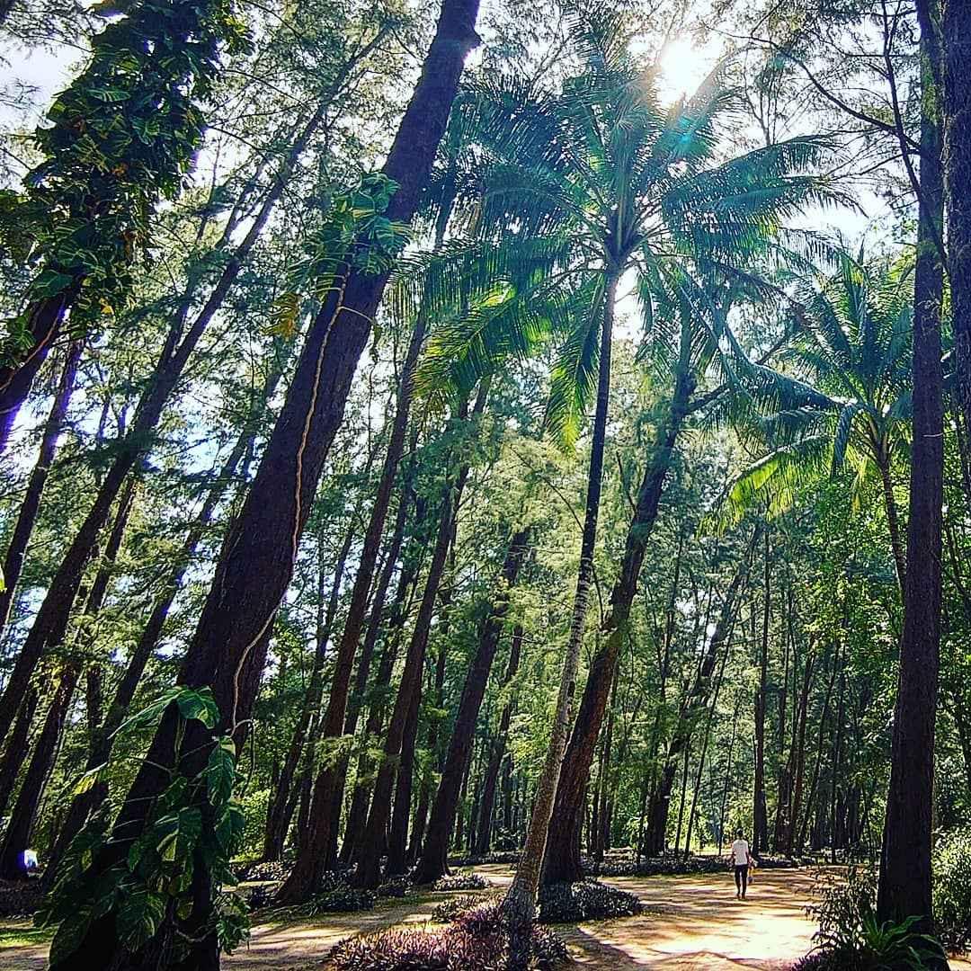 Zon door de bomen van het Sirinat National Park op Phuket