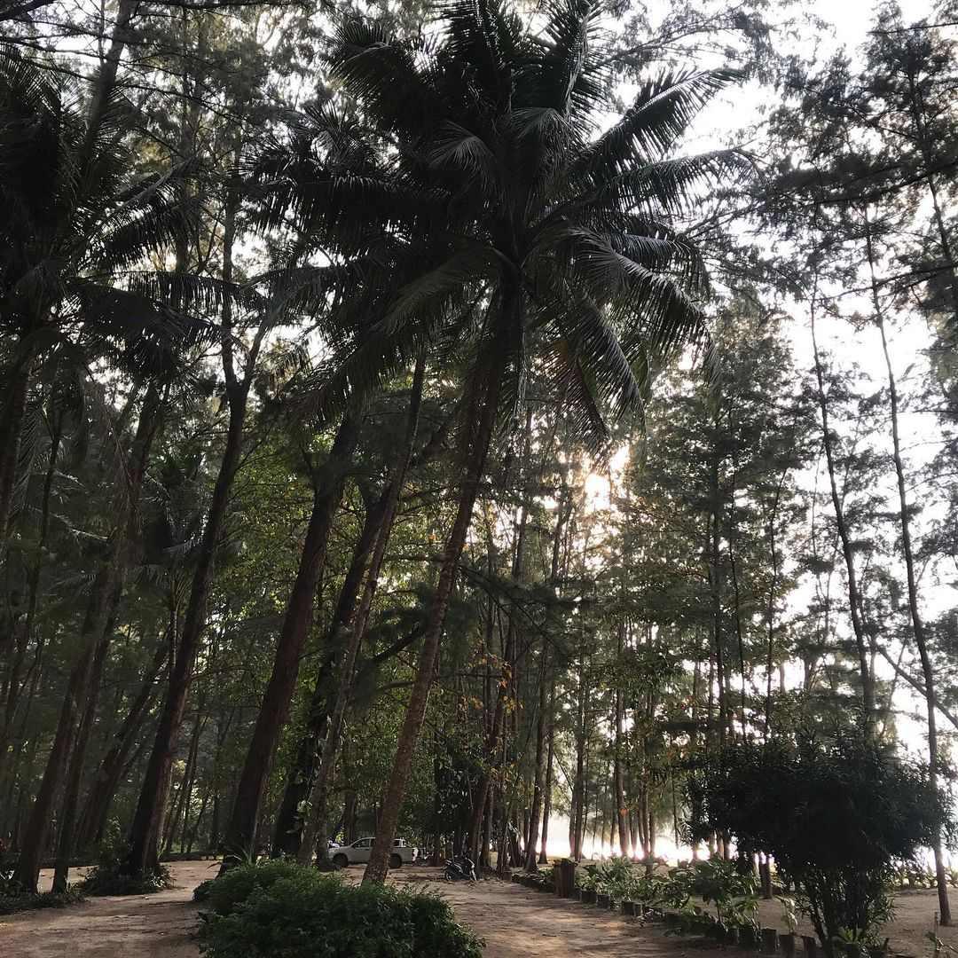 Bomen in het Sirinat National Park op Phuket