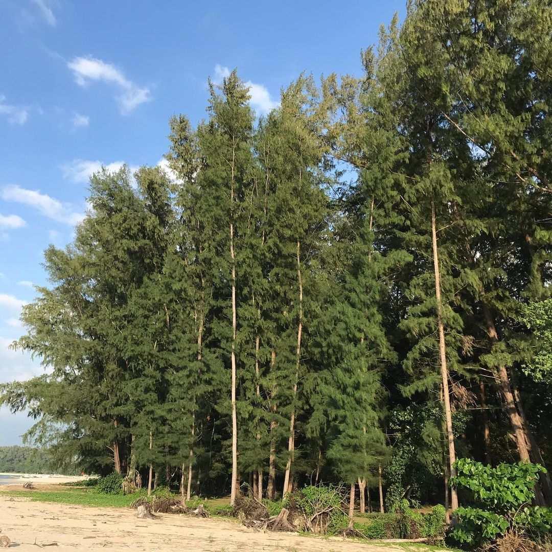 Bomen aan het strand in het noorden van Phuket
