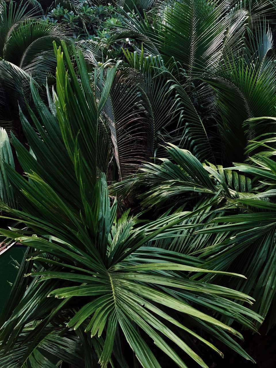 Jungle op Koh Ngai