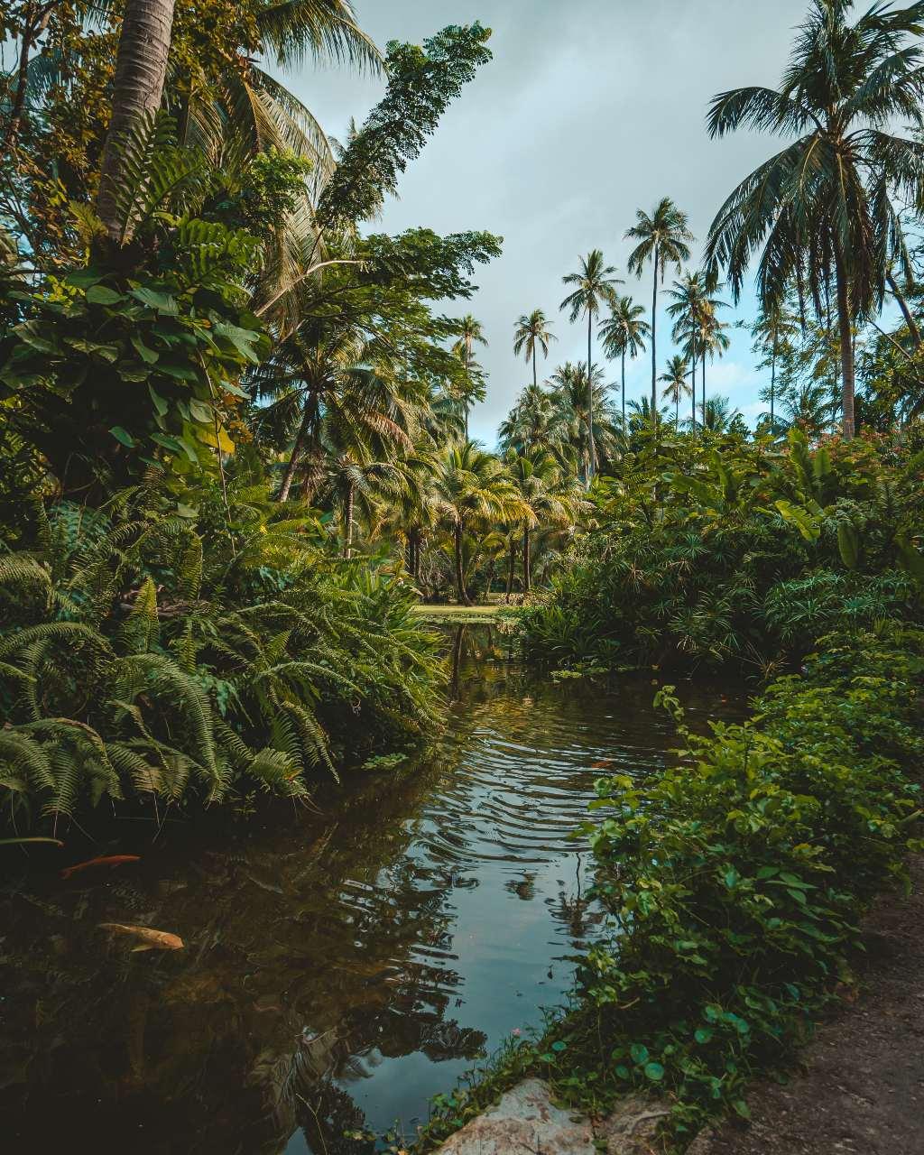 Mooie tuin van een resort