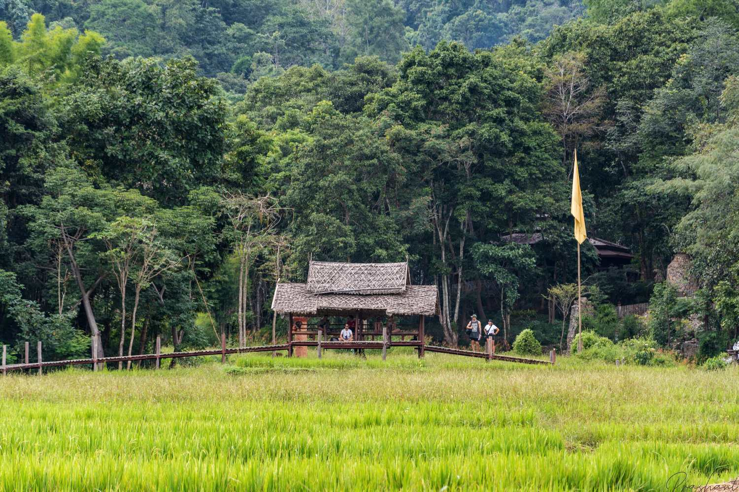 The bamboo bug over the rice fields in Pai in northern Thailand