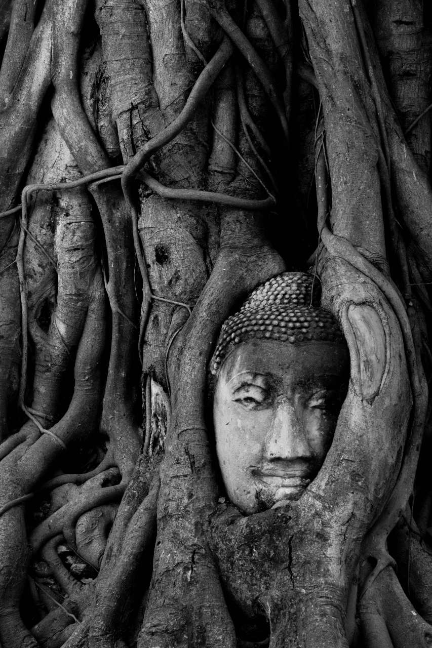 A Buddha's head in tree roots, Ayutthaya
