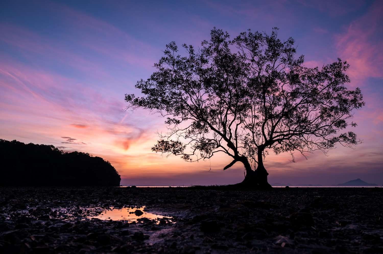 Lonely tree in Krabi