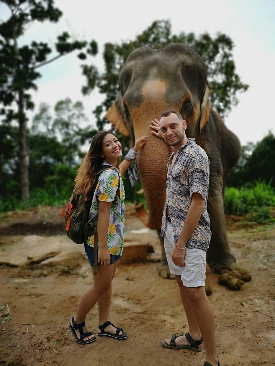 Elephant on Koh Phangan, Thailand