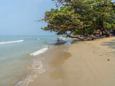 White Sand Beach With Tree And Swing